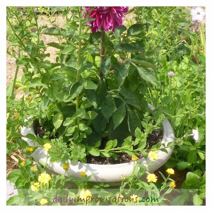 The heat stimulates many plants to bloom, but they need adequate water to do it.