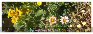 Flowers blooming in mid September in my garden (from left to right): Prairie Sun Rudebekia, Gazania, Portulaca