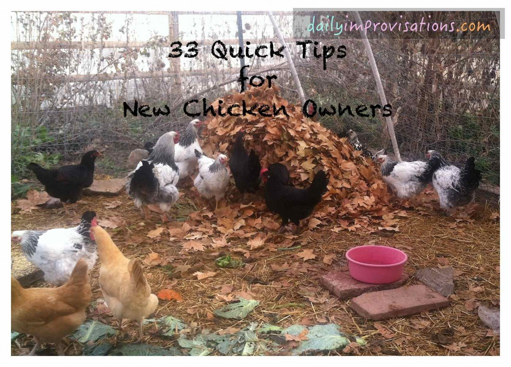 33 Quick Tips for New Chicken Owners