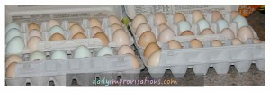 We write the date collected on our eggs to make sure to use the FIFO (first in first out) method.
