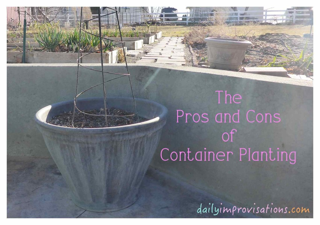 The Pros and Cons of Container Planting