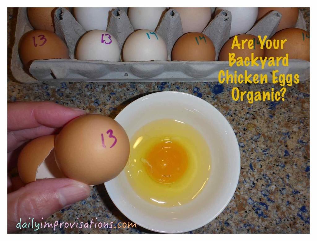 Are Your Backyard Chicken Eggs Organic?