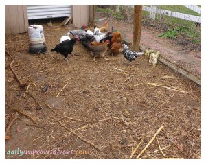 This space is easily 1/10th of the space my chickens get to freely roam.