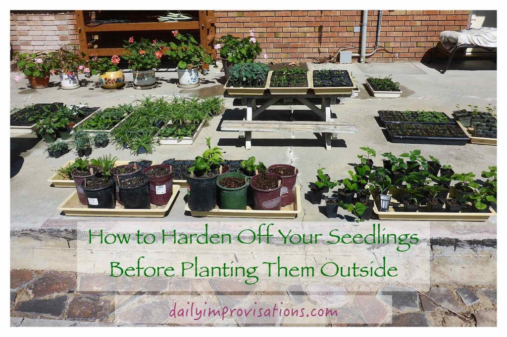 How to Harden Off Your Seedlings Before Planting Them Outside