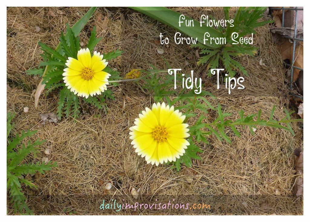 Fun Flowers to Grow From Seed: Tidy Tips
