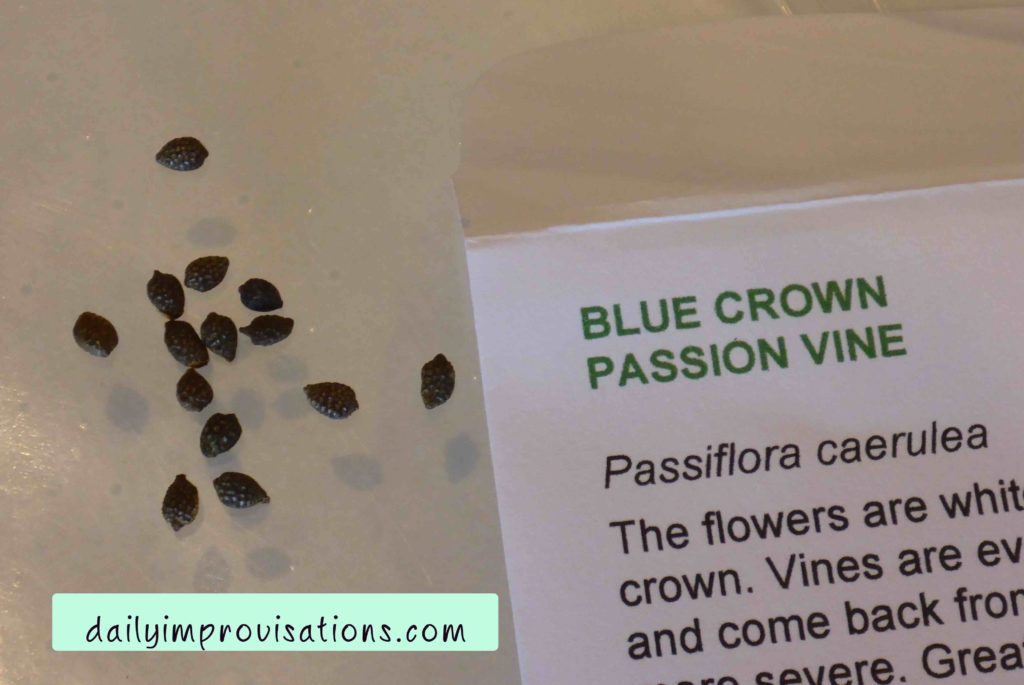 Fun Flowers to Grow from Seed: Passion Vine