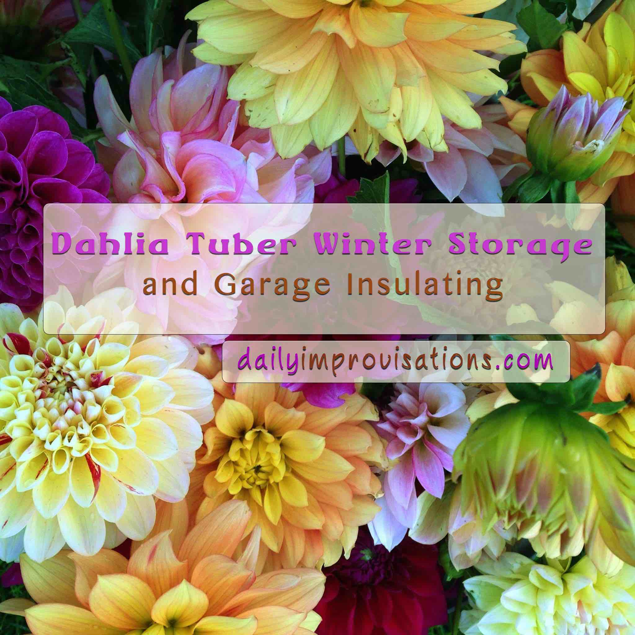 Dahlia Tuber Storage Blooms To Remember Copy