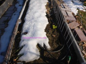 One of my raised beds, still covered with a lot of snow, but with soil that already crumbles nicely in the hand.