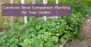 Common Sense Companion Planting for Your Garden