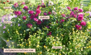 Here are some of last year's dahlias. I have labeled the other flowers in the photo, too.