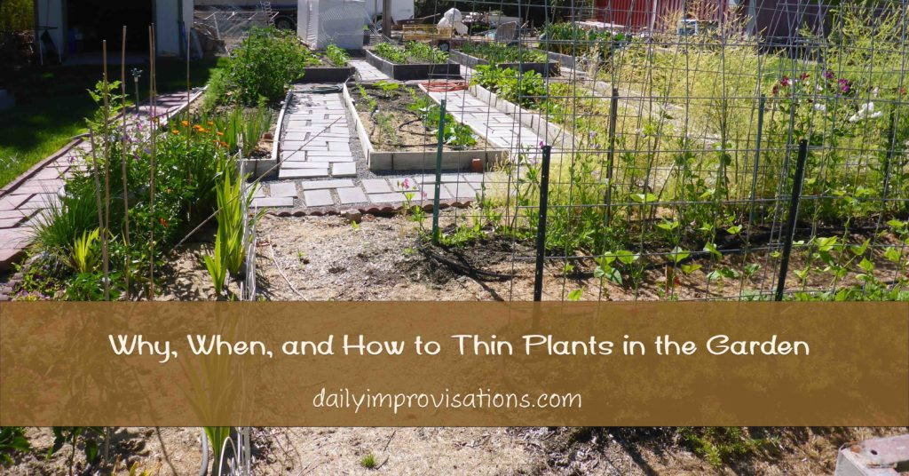 Why, When, and How to Thin Plants in the Garden