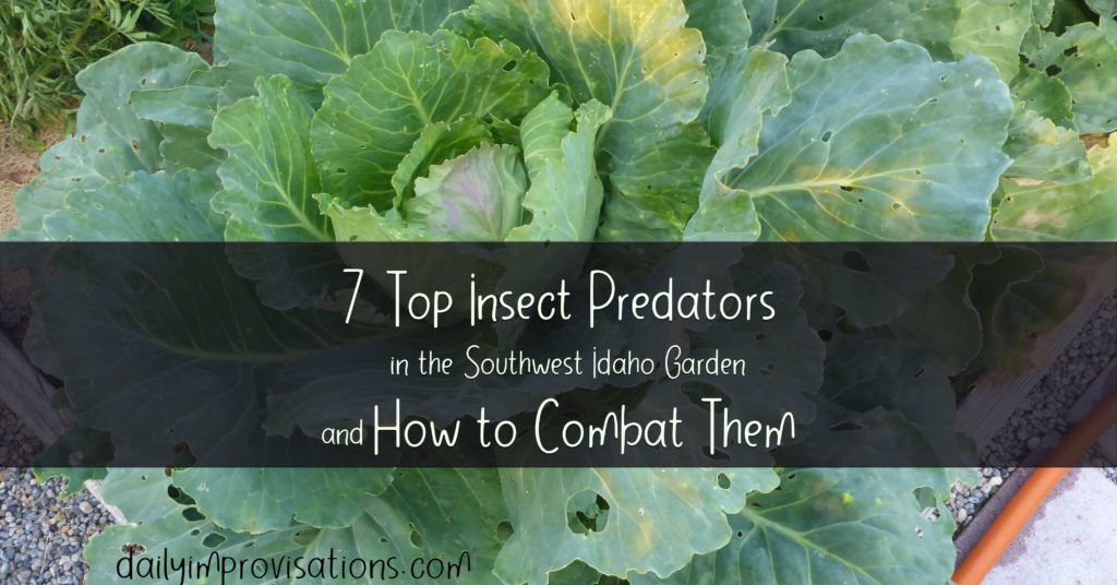 7 Top Insect Predators in the Southwest Idaho Garden and How to Combat Them